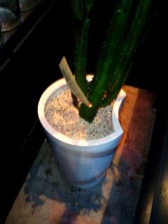 サボテンの鉢